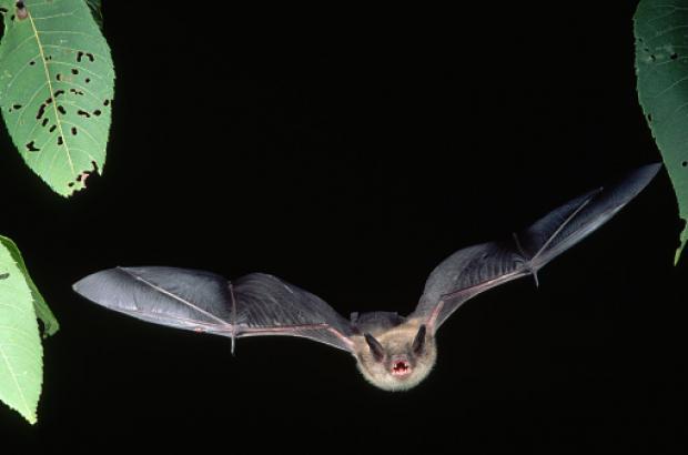 Bat Light District Brussels