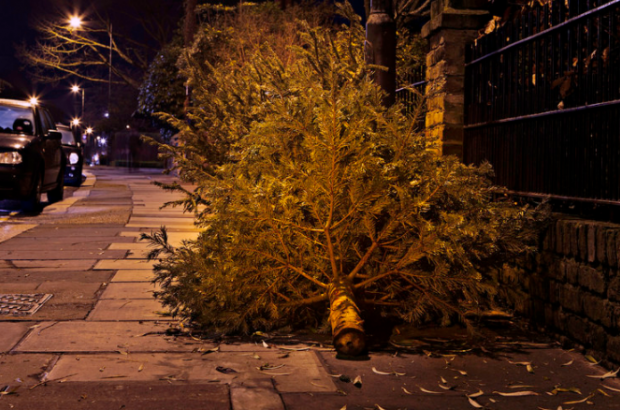 How To Dispose Of Your Christmas Tree In Brussels